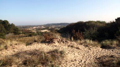 Voorlinden-duinen